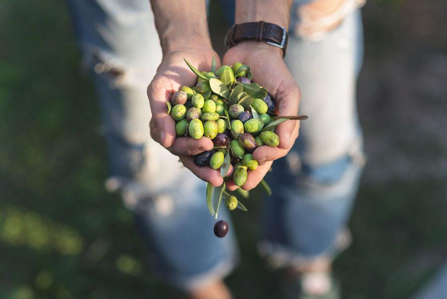 beneficios aceite oliva ecologico