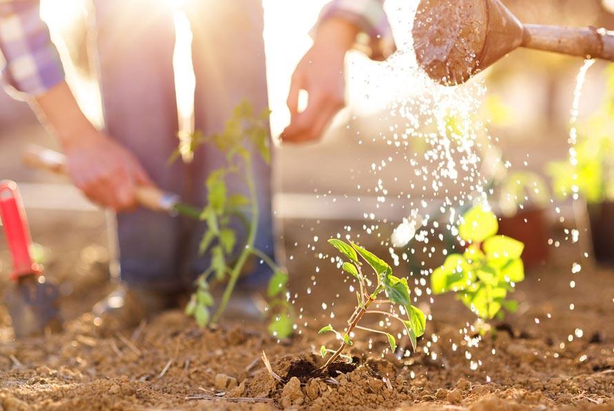 razones consumir alimentos ecologicos